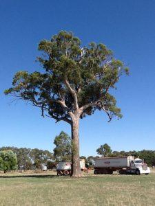 Reg Tree 2