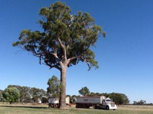 Reg Tree